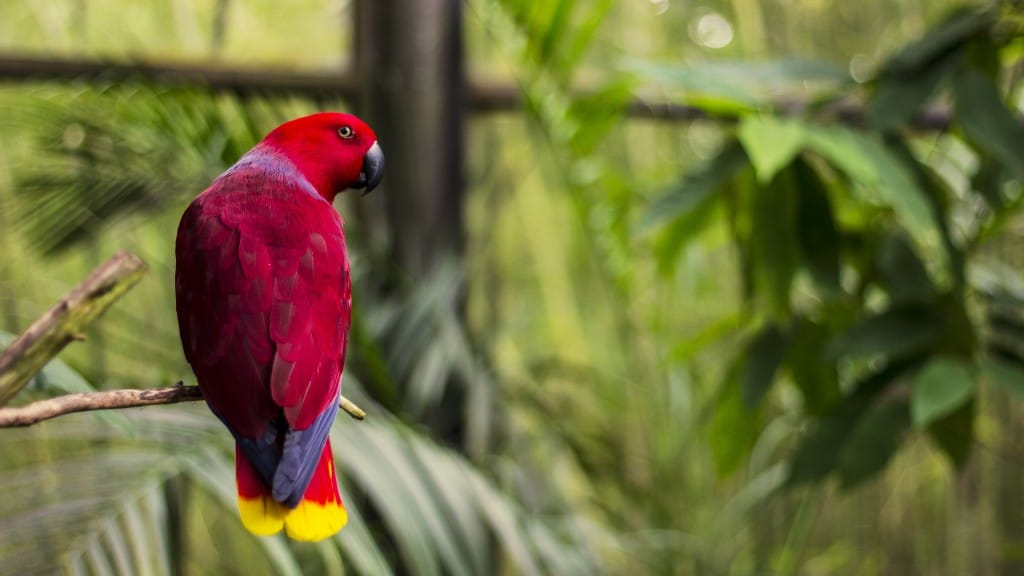 Tropical Parrot