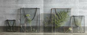 Glass Frames with Decorative Foliage.