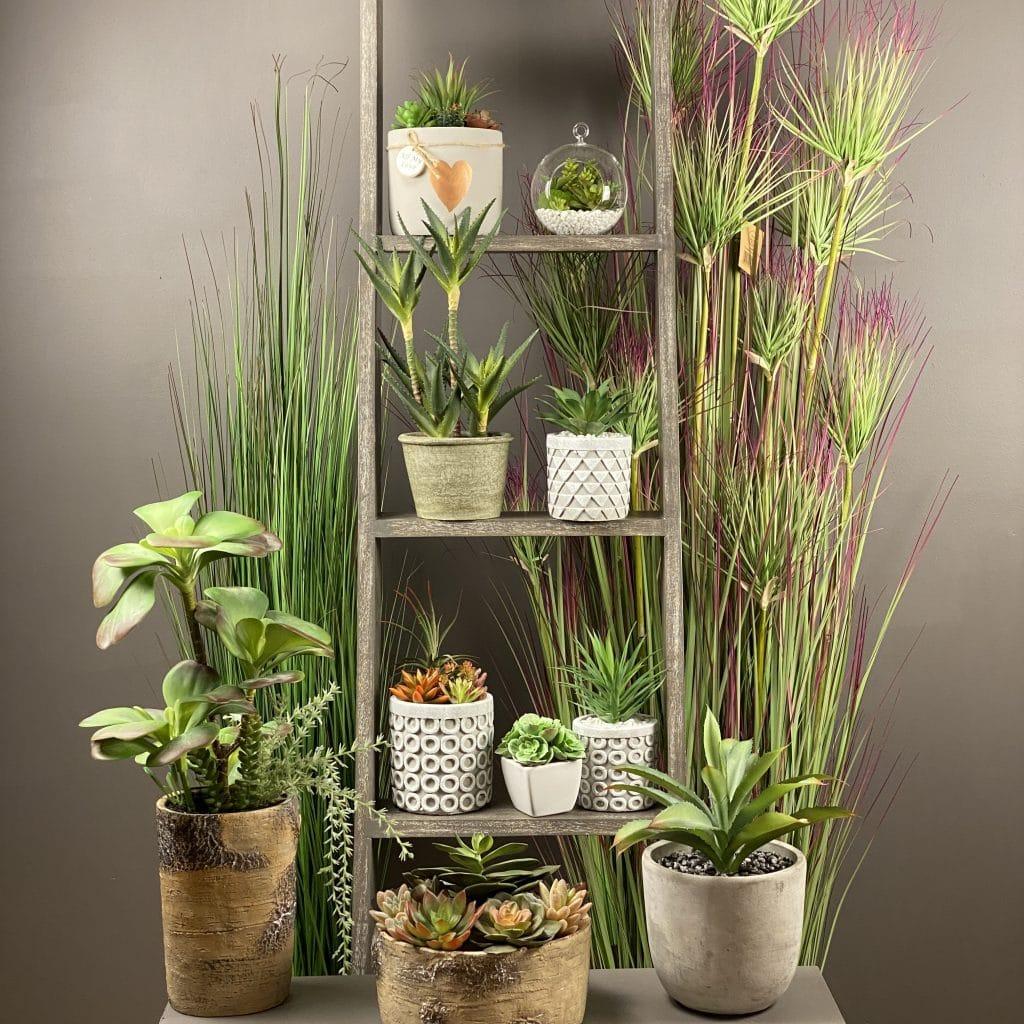 House plant pots