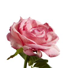ROSE decorative faux pink rose