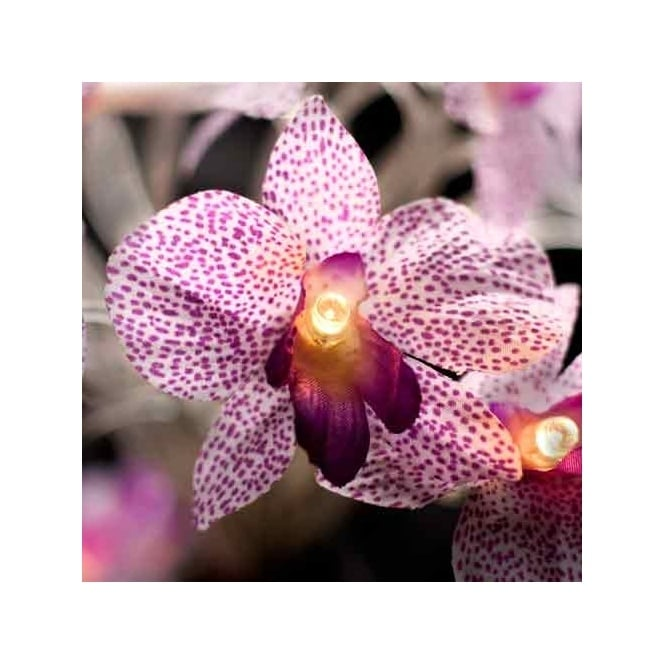 Led Light String With White Purple Orchid Flower Shades 20 Lights